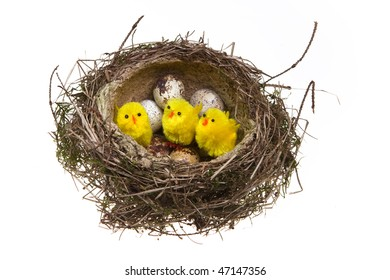nest, it twisted from grass with eggs and chicken