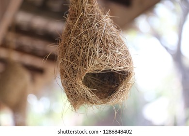 nest under roof