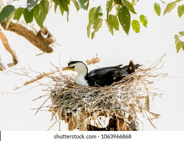 Nested bird on a white background