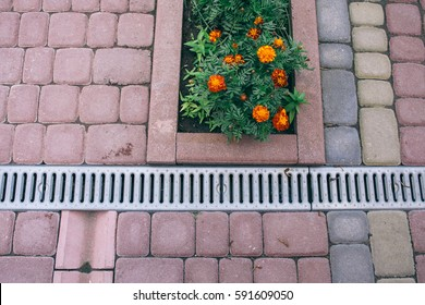 Nested pavers of various colors, around the grass is green, chic garden and the flowers bloom