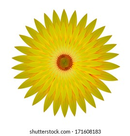 nested sunflower isolated on white