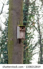 nesting box on the tree