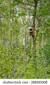 nesting box for wild birds fixed to a tree