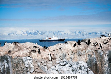 Nesting chinstrap penguins in front of cruise ship in Antarctic Peninsula