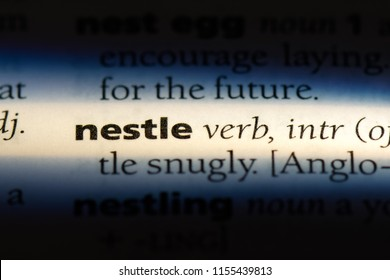 nestle word in a dictionary. nestle concept.
