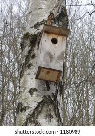 nestling box on the tree