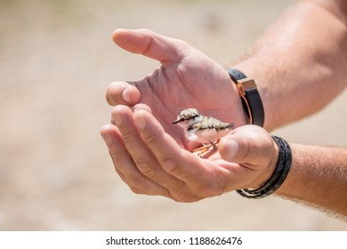 A nestling in the hands of a person, the concept of protecting care and kindness