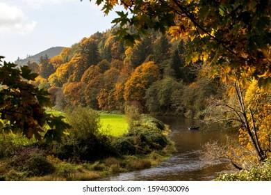 Nestucca River Oregon , fall foliage