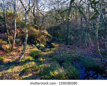 Nether Brook runs down off Derwent Moor through small shaded wooded valleys