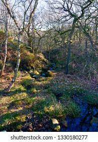 Nether Brook runs gently down from Derwent Moor through a small shaded wooded valley
