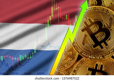 Netherlands flag and cryptocurrency growing trend with many golden bitcoins