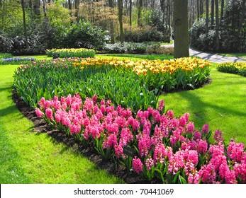 The Netherlands, Haarlem. Flowers in a botanical garden