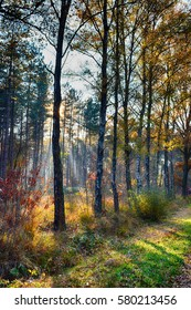 The Netherlands, Mastbos, Autumn in forest