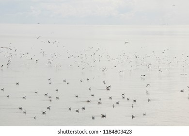 Netherlands,Friesland,Afsluitdijk, july 2018:Seagulls are resting after the fishing boat left