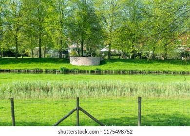 Netherlands,Wetlands,Maarken, Green vegetation at Wetlands