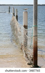 Netting for ocean baths with seagulls