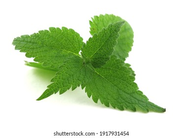 Nettle Bush with leaves on a white isolated background