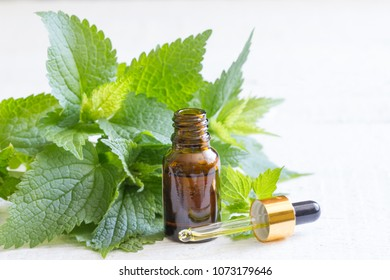 Nettle essence, oil in a small bottle and fresh leaves on white background