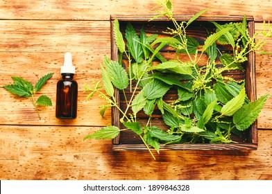 Nettle extract in bottle and fresh nettle leaves.Stinging nettles or urtica medical herb
