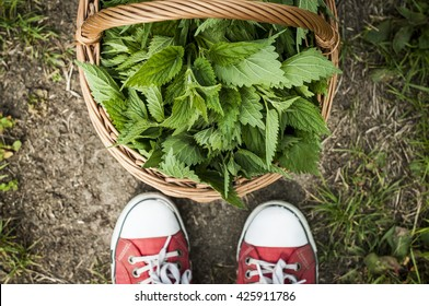 Nettle in the hamper and red shoes. Hipster. Harvest. Herbs.