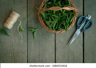 Nettle harvest. Basket full of nettle leafs, scissors and twine bow on a wooden table. Beautiful fresh, green herbs on a grey background. Copy space. Horizontal image