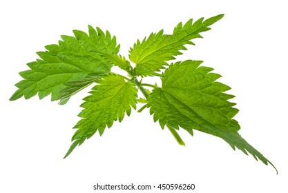 Nettle isolated on a white background