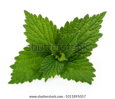 Nettle isolated on white background
