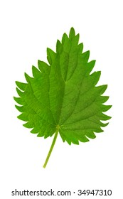 Nettle leaf isolated on white.