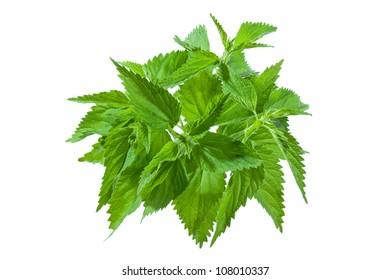 Nettle leafs.