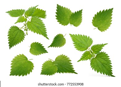 Nettle leaves isolated on white background. Collection.