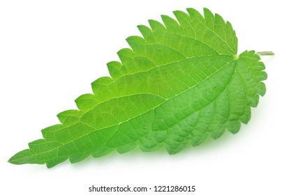 Nettle leaves isolated over white background