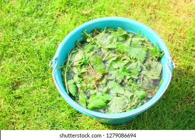 nettle manure in a seal