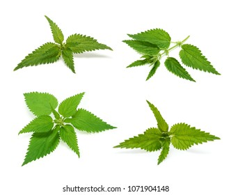 Nettle set isolated on white background
