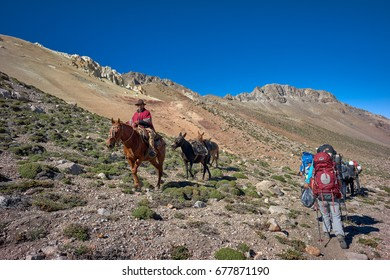 NEUQUEN, ARGENTINA - DECEMBER 21 John Doe Arriero or Muleteer going for the climber's cargo. Adventure tourism attracts people to remote areas. December 21 2016 in Domuyo Mount, Neuquen, Argentina