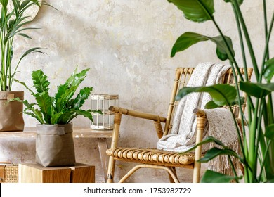 Neutral composition of living room interior with rattan armchair, a lot of tropical plants in design pots, decoration and elegant personal accessories in stylish home decor.