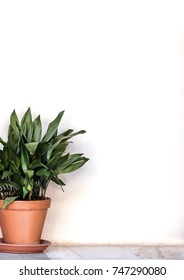 Neutral plant pot isolated background