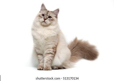 Cat Background Images, Stock Photos \u0026 Vectors
