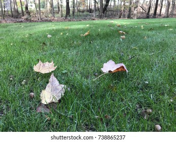 Never Ending Fall Leaves