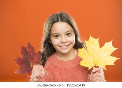 Never pass up chance to enjoy natures beauty Small girl smiling with autumn leaves. Happy autumn season. Autumn nature. Natural beauty. Little child hold maple leaves. Autumn paints in colors.