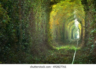 """New area of the Natural tunnel of """"love"""" formed by trees in Romania"""