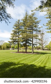 New Bedford, Massachusetts, USA - May 18, 2016: Three Cedars of Lebanon border the expansive lawn for social events at Allen C. Haskell Public Gardens in New Bedford, Massachusetts