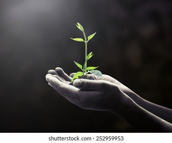 New begin concept: Black and white human hands holding small tree on dark room background