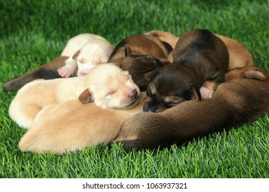 New born babies poodle dogs on green grass background