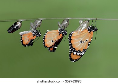 New born butterfly - Stock Image