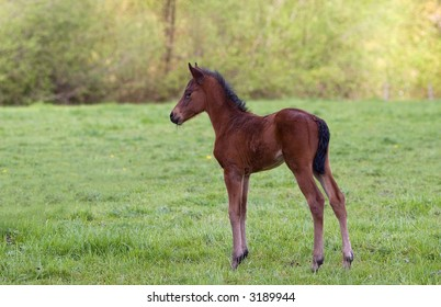 new born colt at local ranch