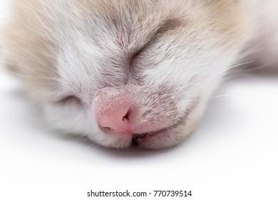 New born kitten is sleeping on a white floor