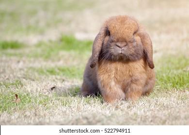 New born rabbit or cute bunny on green grass.