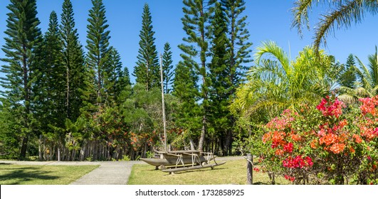 New caledonian lush vegetation with a wood boat decoration : araucaria pines, bougainvillers and other tropical plants.