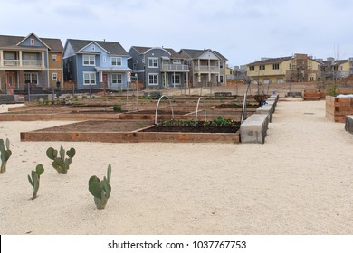 New community gardens within a new part of the Mueller nieghborhood in Austin, Texas