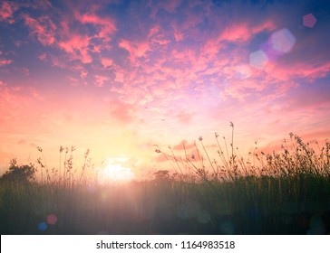 A new day concept: Meadow landscape sunrise background